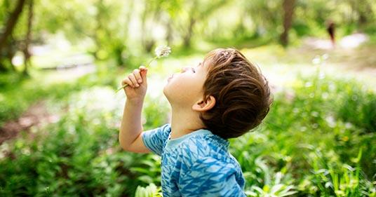 little kindergarten boy blowing dandelions using breathing exercise for kids